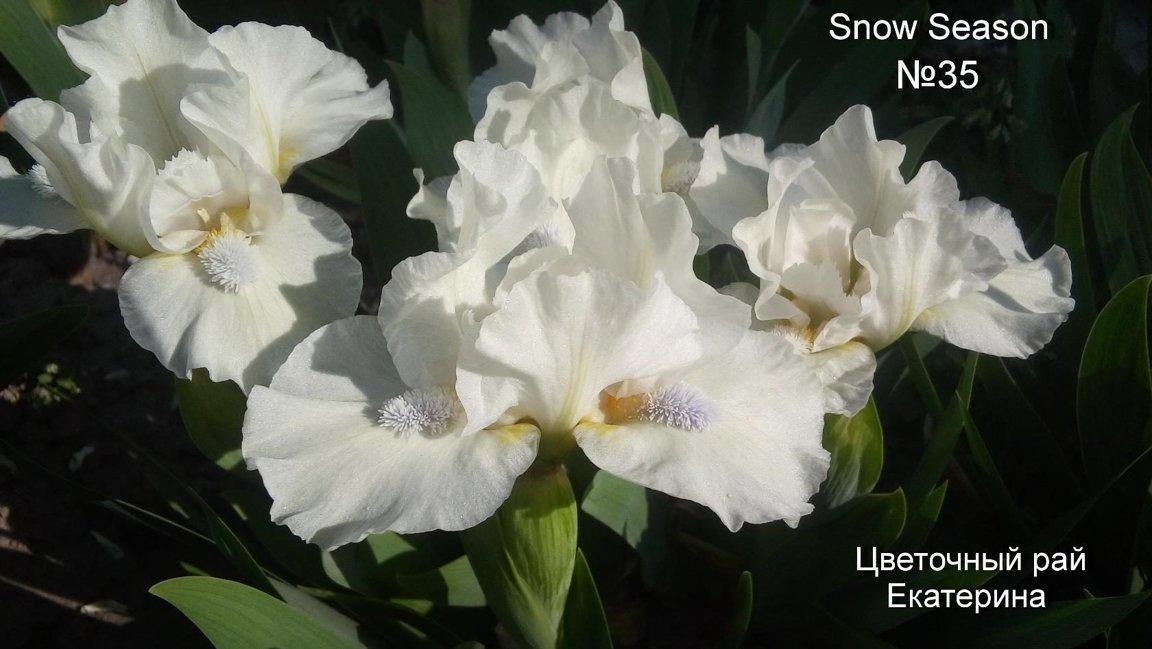 №35   Snow Season   ( Сноу Сизон)
