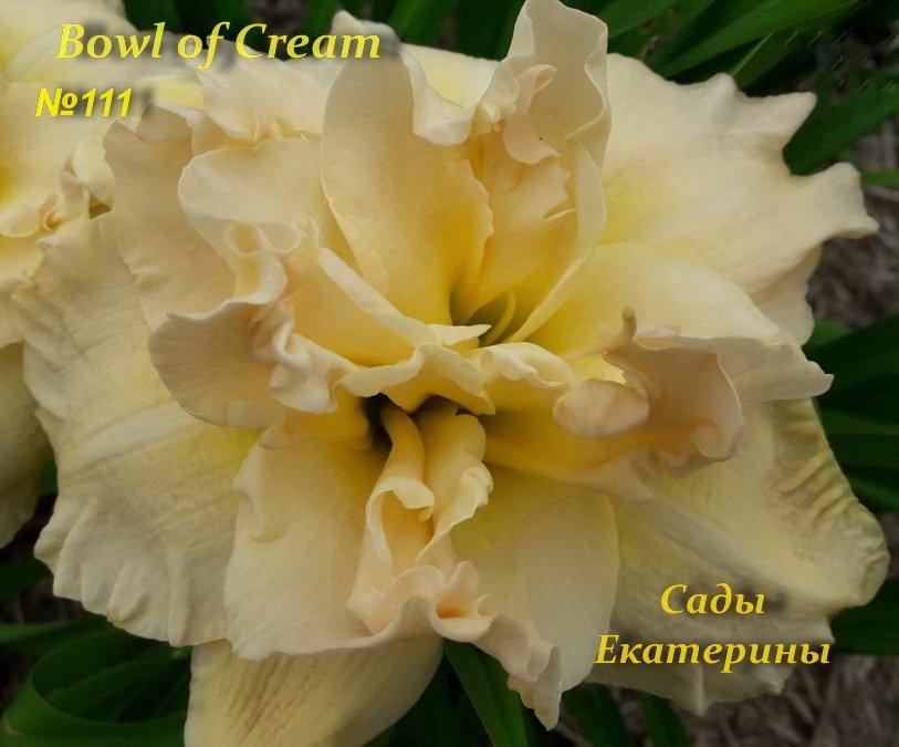 №111 Bowl of Cream ( Боул оф Крем )