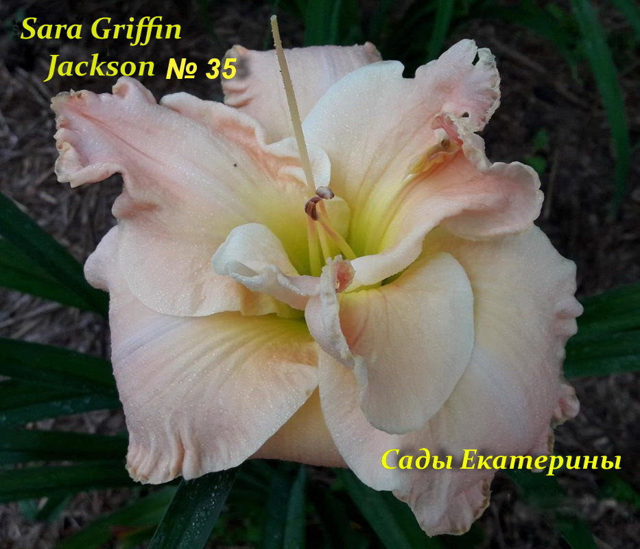 №35 Sara Griffin Jackson