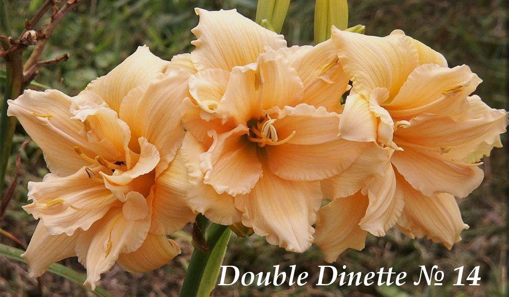 №14 Double Dinette