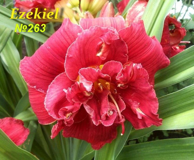 №263 Ezekiel