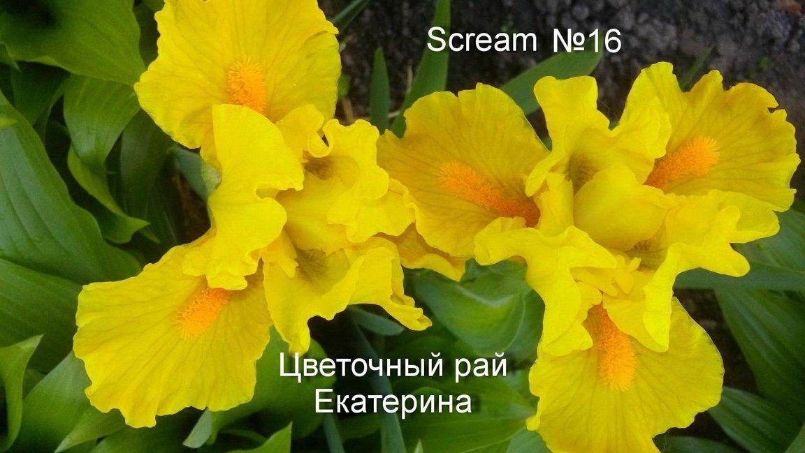 №16  SCREAM  ( Скрим )