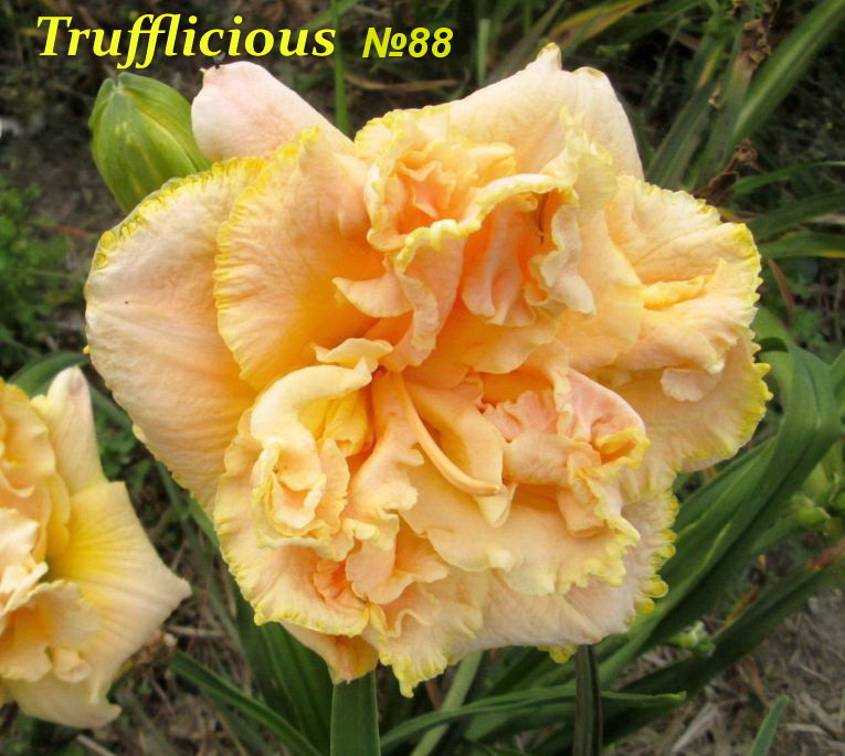 №88 TRUFFLICIOUS