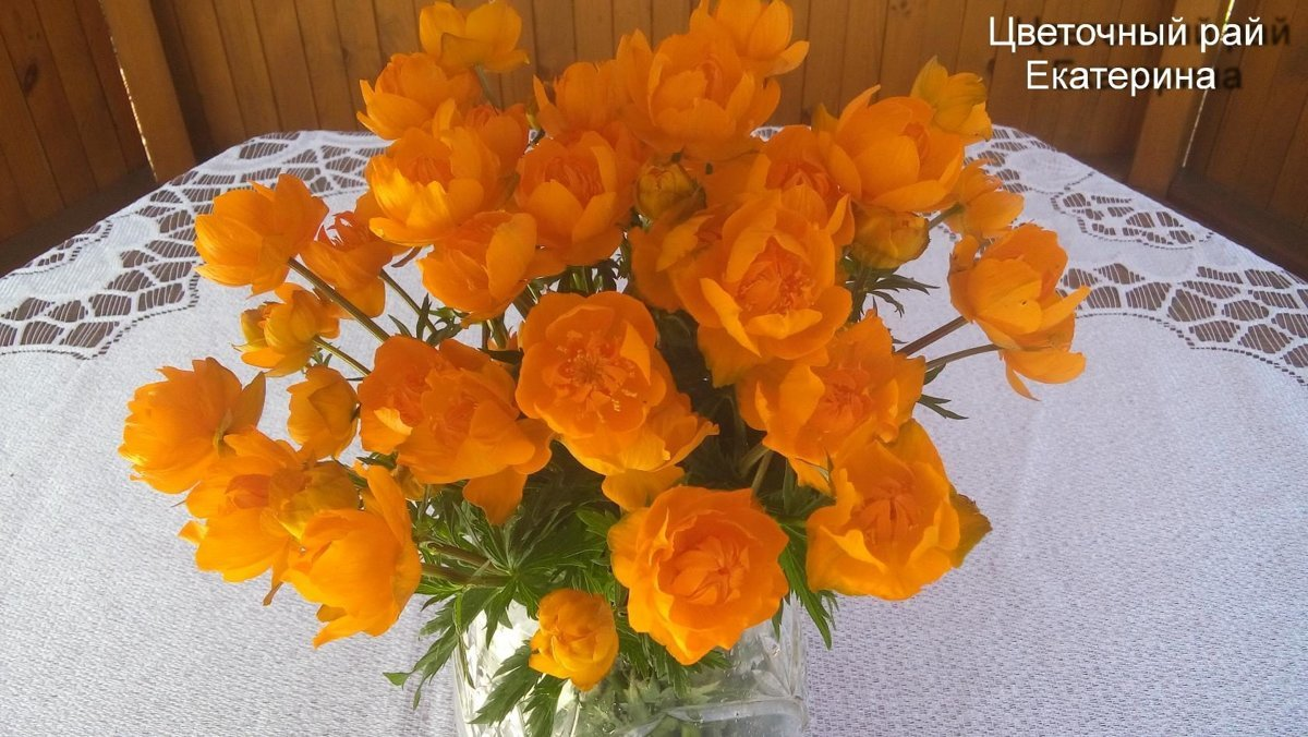 №1 Купальница оранжевая
