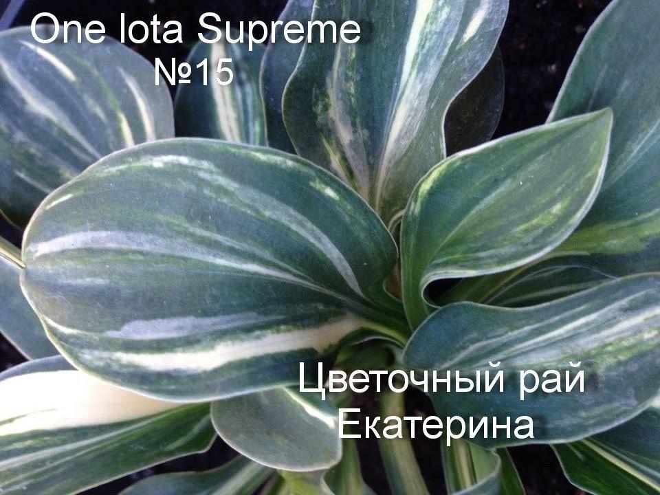 "№15 ""One Iota Supreme"""