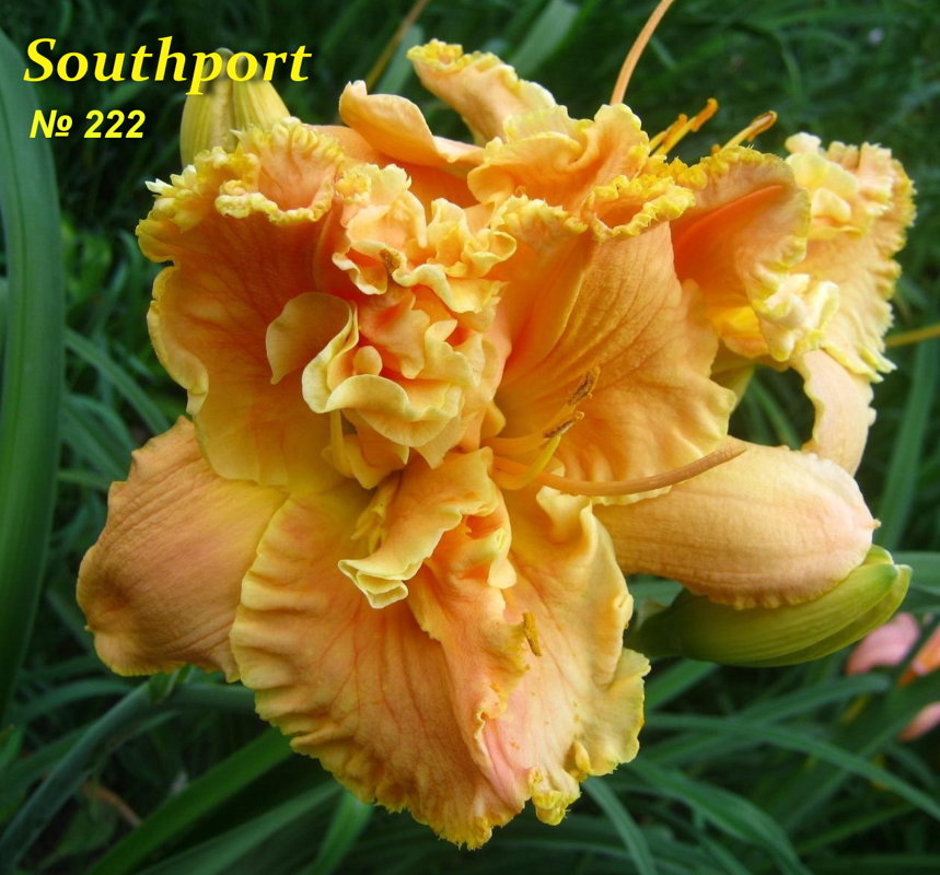 №222  Southport