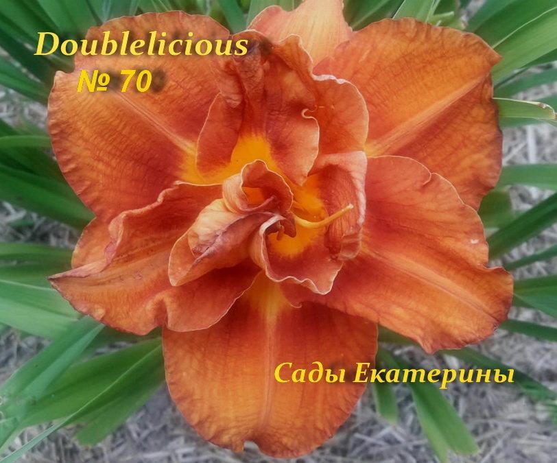№70 Doublelicious (Даблишес )