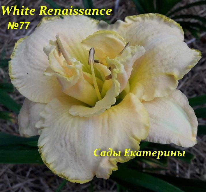 №77  White Renaissance