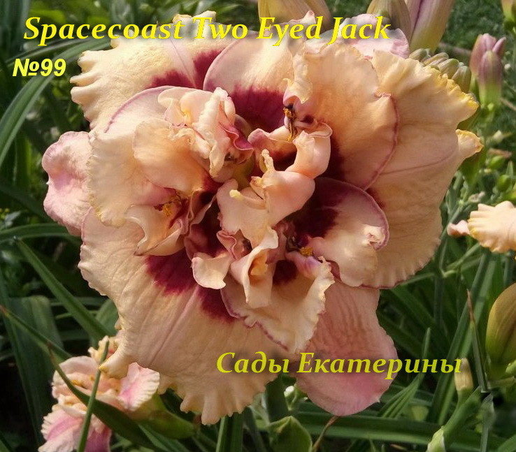 №99 SPACECOAST TWO EYED JACK