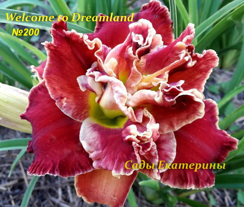 №200  Welcome to Dreamland