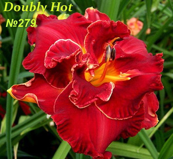№279  DOUBLY HOT