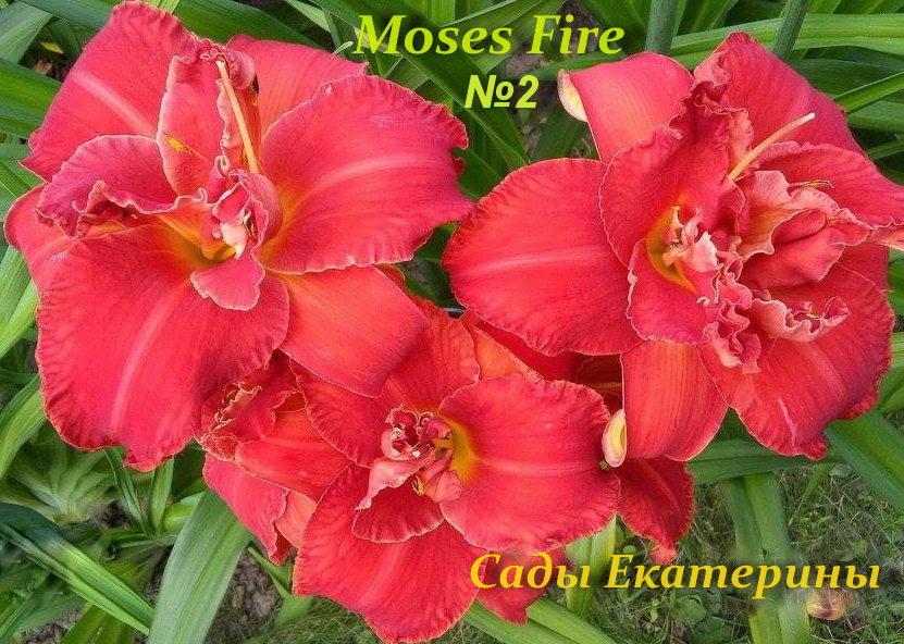 №2 Moses Fire (Мозес Файер )