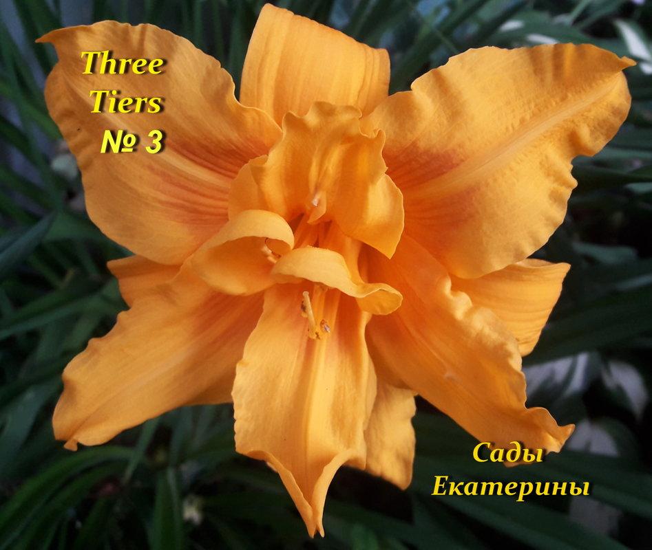 №3 Three Tiers ( Три Тайерс )