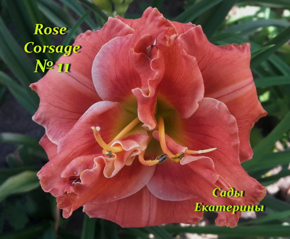 №11 Rose Corsage ( Роуз Корсаж)