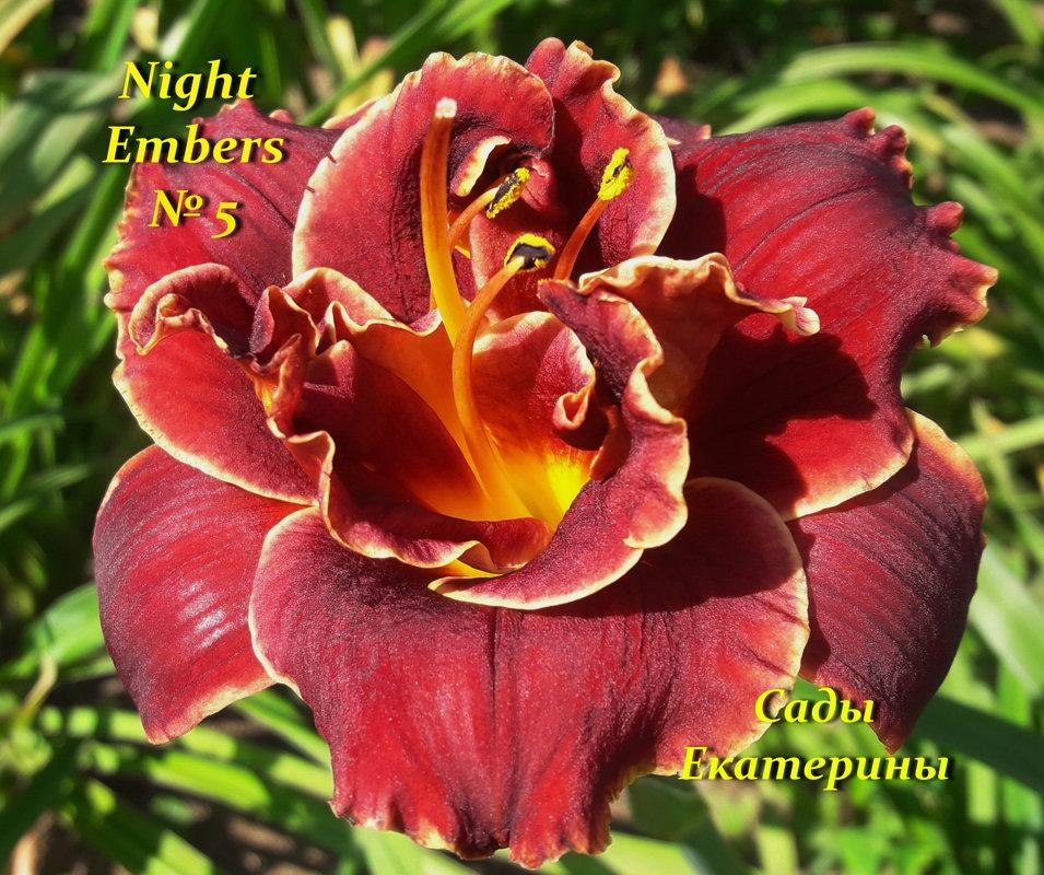 №5 Night Embers (Найт Эмберс)
