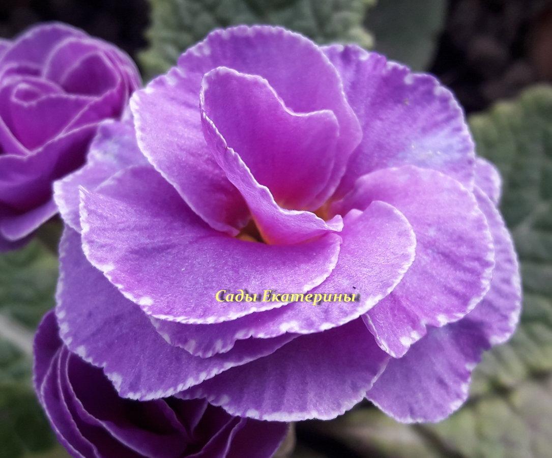 № 15  Princess Neon Violet
