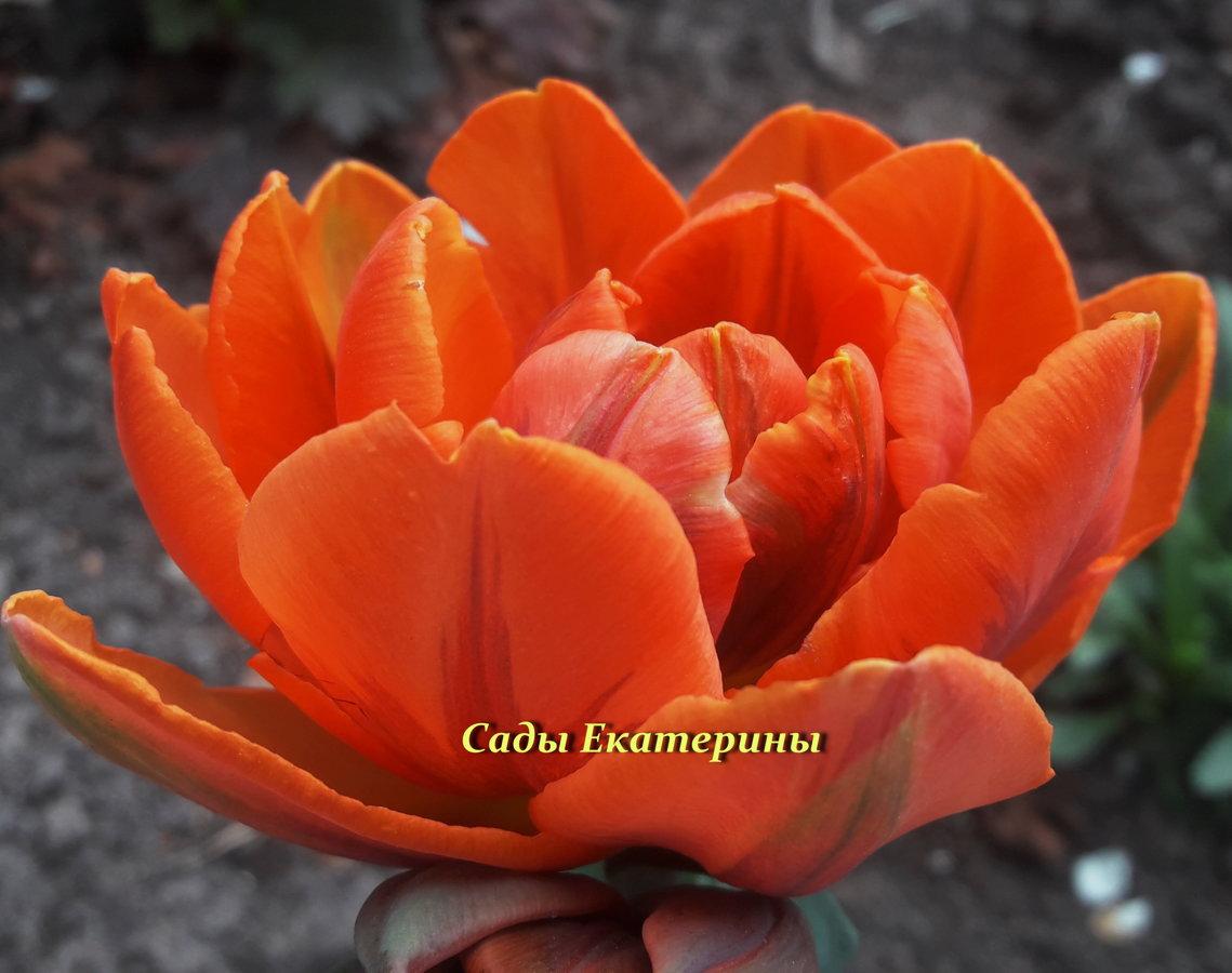№ 12  Orange Princesd