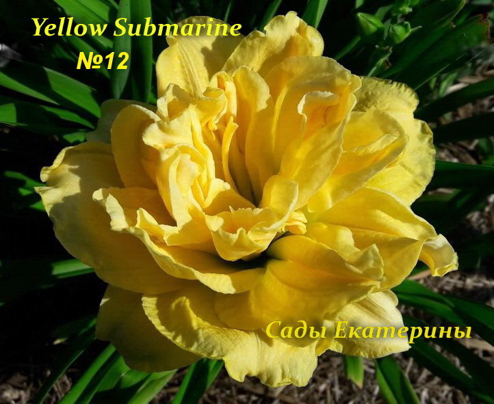 №12   Yellow Submarine (Йеллоу Субмарин)