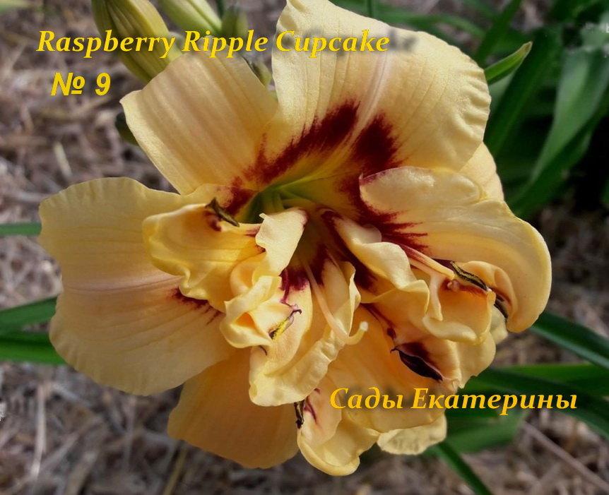 № 9 Raspberry Ripple Cupcake