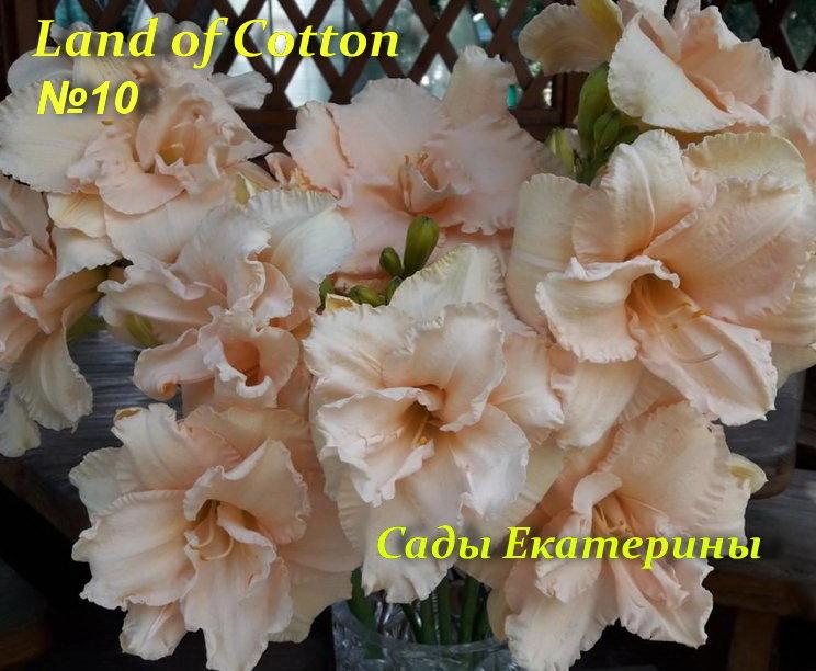 №10    Land of Cotton  (Ленд оф Каттн)