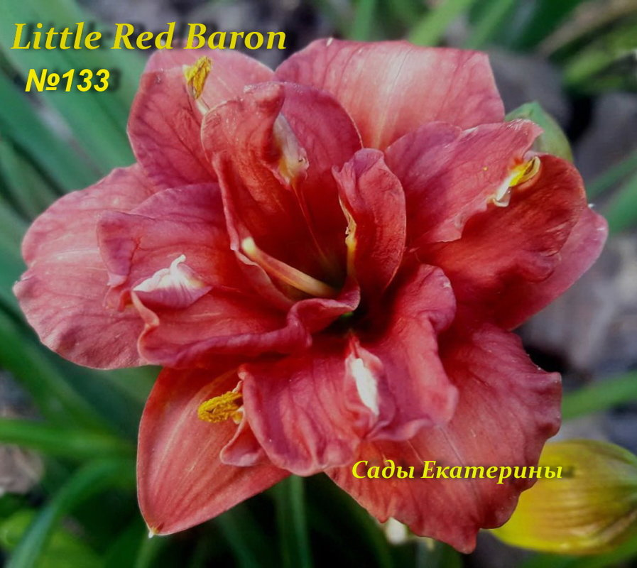 №133 Little Red Baron