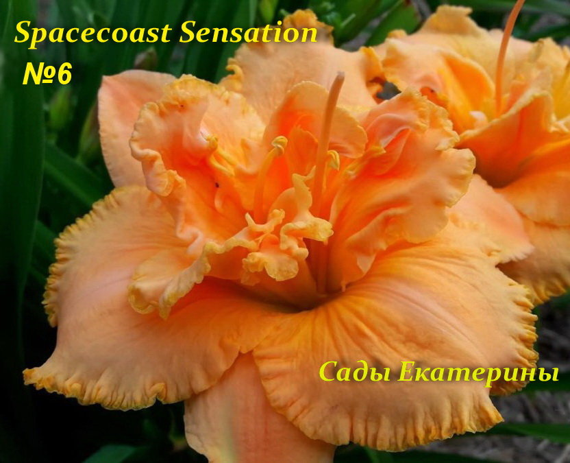№6 Spacecoast Sensation