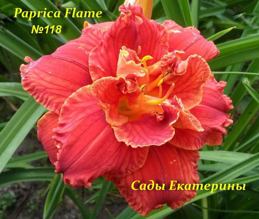 №118 Paprika Flame  ( Паприка Флейм)